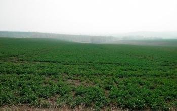 Запрет на продажу земли может стоить €2-75 тысяч на человека - Минюст