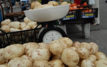 В Украине резко подешевел молодой картофель