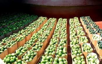 Эксперты дали прогноз по ценам на арбузы в Украине